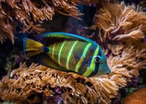 ryba-1