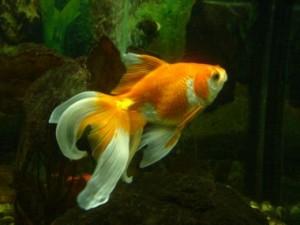 ryba-2