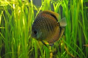 ryba-3